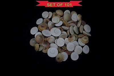 Gomti Chakra Natural Untreated Lucky Gemstones Of Gomati River - 101 Pieces