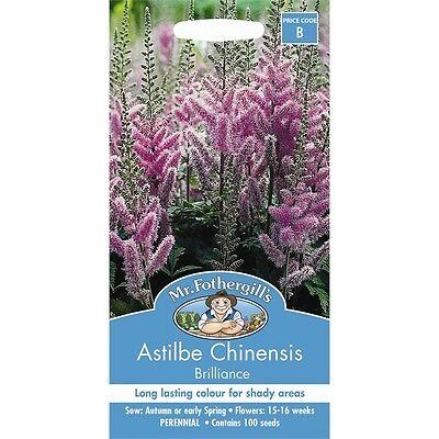Mr Fothergill's Astilbe Chinensis
