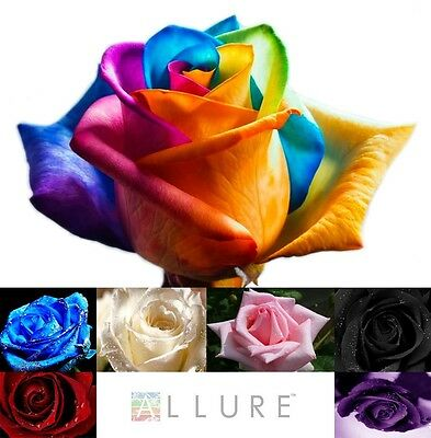 1 x 50 x ROSE SEEDS MULTI-COLOURED MIXED RAINBOW ROSE/BUD STEMLING, METER SHOWER