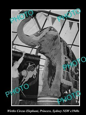 OLD LARGE HISTORIC PHOTO OF WIRTHS CIRCUS ELEPHANT, PRINCESS IN SYDNEY c1940