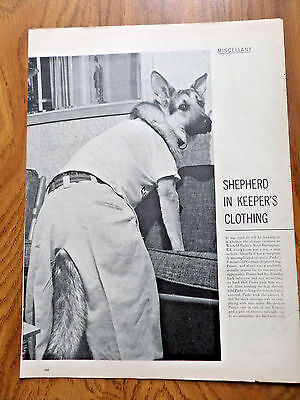 1958 Photo Article Ad German Shepherd Dog Clothing Winfield Parks Barrington RI