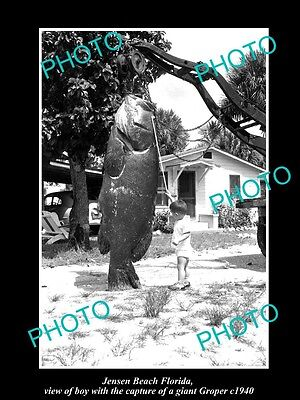 OLD LARGE HISTORIC PHOTO OF JENSEN BEACH FLORIDA, BOY WITH HUGE GROPER c1940