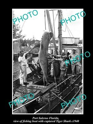 OLD HISTORIC PHOTO OF PORT SALERNO FLORIDA, FISHERMAN CATCHING TIGER SHARK c1940
