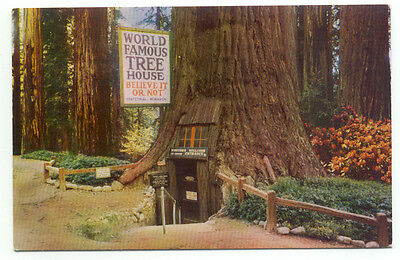 World Famous Tree House Believe It Or Not Tree House Park Postcard  - California