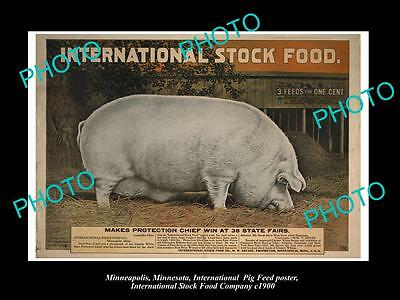 OLD LARGE PHOTO OF MINNEAPOLIS STOCK Co POSTER, PIG FOOD 3in1 STOCK FOOD c1900 4