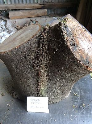 Beech Wood,Beech Crotch,30 Lbs,Beech Wood Turning Block,free Delivery