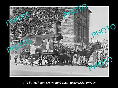 OLD HISTORIC PHOTO OF ADELAIDE SA, AMSCOL MILK & DAIRY Co HORSE CART c1920s