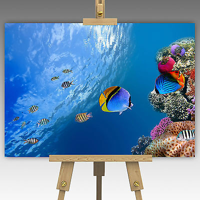 Ocean Coral Reef Marine Life Tropical Fish Wall Art Canvas Picture Print A1, A0