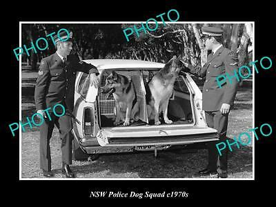 OLD LARGE HISTORIC PHOTO OF NEW SOUTH WALES POLICE DOG SQUAD c1970