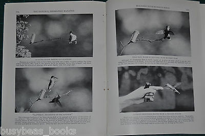 1928 magazine article about HUMMINGBIRDS, feeding attracting photographing