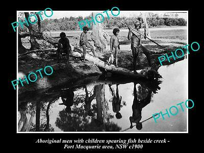 OLD LARGE HISTORICAL PHOTO OF ABORIGINAL MEN SPEAR FISHING BESIDES CREEK c1900