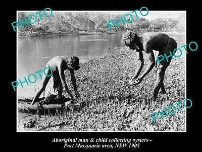 OLD LARGE HISTORICAL PHOTO OF ABORIGINAL MAN & CHILD COLLECTING OYSTERS c1905