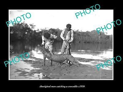 OLD LARGE HISTORIC PHOTO OF ABORIGINAL MEN CATCHING A CROCODILE c1950