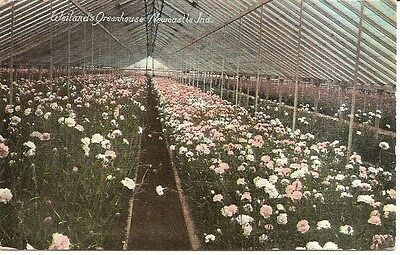 H Vintage Postcard New Castle Indiana Weiland's Greenhouse Interior