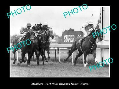 Old Large Horse Racing Photo Of Manikato Winning The Blue Diamond Stakes 1978