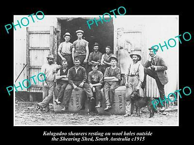OLD LARGE HISTORIC AUSTRALIAN WOOL & SHEARING PHOTO, KALAGADOO SHEARERS c1915