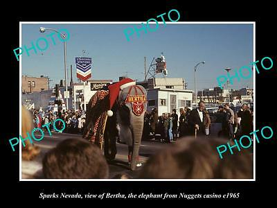 OLD LARGE HISTORIC PHOTO OF SPARKS NEVADA, BERTHA THE CASINO ELEPHANT c1965 1