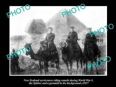 Old Large Historic Photo Of New Zealand Anzac Soldiers In Egypt 1917, Pyramids