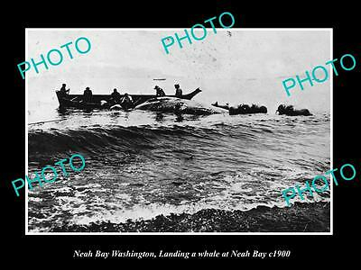 OLD LARGE HISTORIC PHOTO OF NEAH BAY WASHINGTON, THE WHALING CREW LANDING c1900