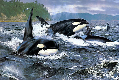 Home Decor Oil Painting HD Print on Canvas Orca Stration art wall deco 14 Fj310