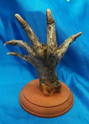 Rougarou Creature Hand Display,sideshow Gaff Display,odd,bizarre,myth,folk Lore