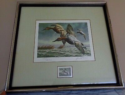 Framed Federal Duck Stamp Print Canvasbacks 1982 David A Maass