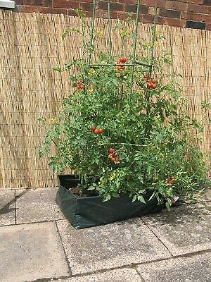 BOTANICO Lets Grow TOMATO PLANTER KIT Plant Frame Support Peppers Chillies NEW