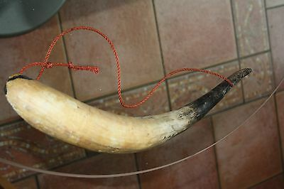 One Antique Cow Horn Possibly For Craft Use, Walking Stick Making Etc.