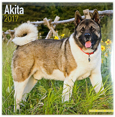 "Akita 2017 Wall Calendar by Avonside (12"" x 24"" when opened)"