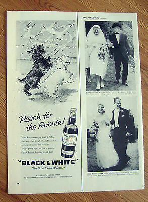 1959 Black White Scottish Scotty Terrier Westie Ad  Sea Gulls on the Beach