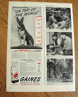 1946 Gaines Dog Food Ad German Shepherd Dog On Top of The World