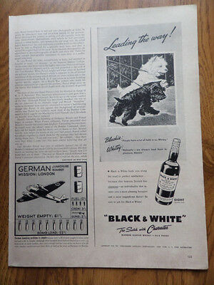 1941 Black White Scottish Scotty Terrier Westie Ad Blackie Whitey on a Walk