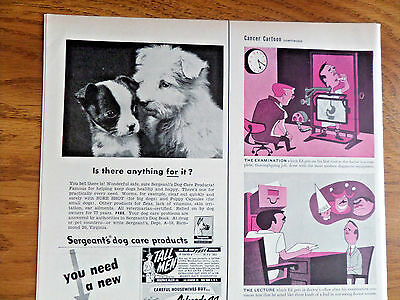 1952 Sergeant's Dog Care Ad  Boston Terrier Dog Puppy