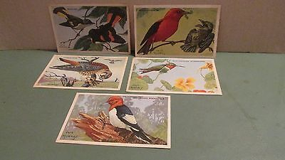 Lot Of 5 Lovely Vintage Bird Pictures From Kellogg's Cereal Krumbles
