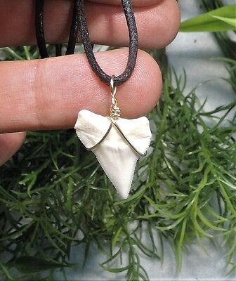 Nice 15/16'' Sharks Tooth Necklace/jewelry/megalodon Fossil Sharks Teeth