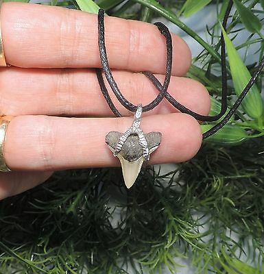 Nice 3/4'' Sharks Tooth Necklace/jewelry/megalodon Fossil Sharks Teeth