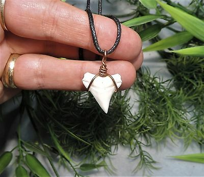 7/8'' Nice Sharks Tooth Necklace/jewelry/megalodon Fossil Sharks Teeth