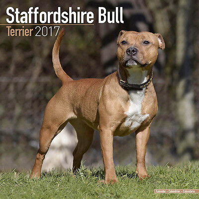 "Staffordshire Bull Terrier 2017 Wall Calendar by Avonside (12"" x 24"" when open)"