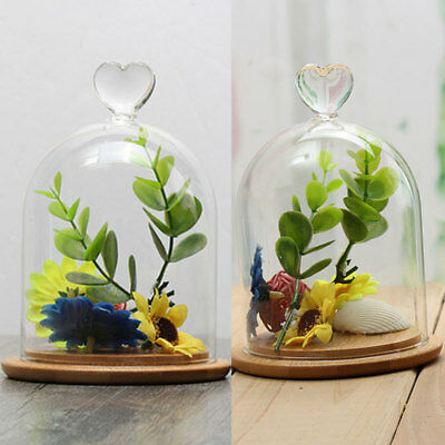 1X 5 Type Glass Display Cloche Bell Jar Dome Flower Immortal Preservation + Base