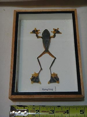 Flying Frog mounted and sealed in box