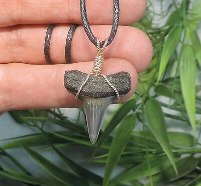 Nice 1 1/16'' Mako Sharks Tooth Necklace/jewelry/megalodon Fossil Sharks Teeth
