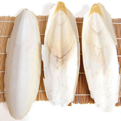 7PCS Trixie Cuttle Fish Bone with Holder - Bird Cage Or Aviary Cuttlefish Bone