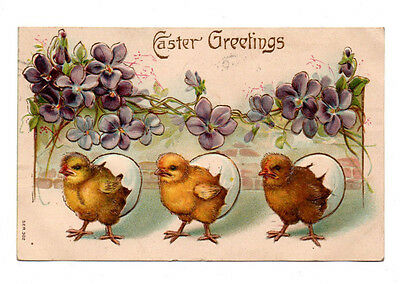 Easter Greetings~3 Hatching Chicks,Garland of Violets 1907 Postcard