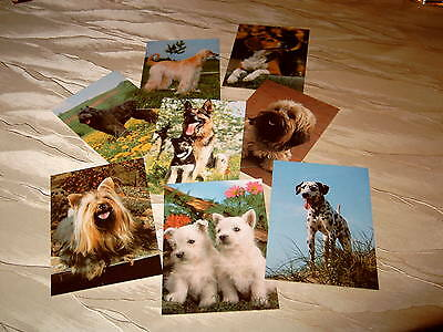 8 AK Dogs Dalmatian Bouvier of Flandres Sighthound Beagle Terrier etc. A_072