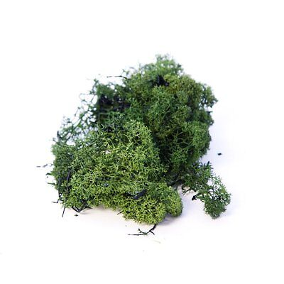 Finland / Reindeer Moss - Natural / Olive / Dark Green 10g - 10Kg Floral Craft