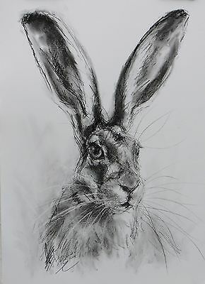 Hare Sketch - ORIGINAL A3 Charcoal Drawing - Animal Art by Belinda Elliott