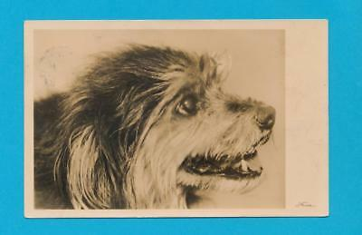 Dog Dogs Awesome Affenpinscher Postcard 1932