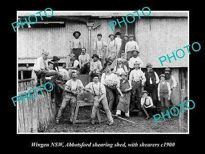 OLD LARGE HISTORIC PHOTO OF WINGEN NSW, THE ABBOTSFORD WOOL SHEARERS c1900
