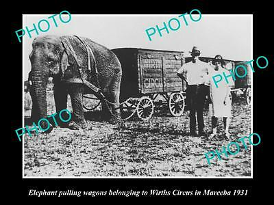 Old Historic Photo Of Wirths Circus Elephant Pulling The Wagon, Mareeba 1931 Qld