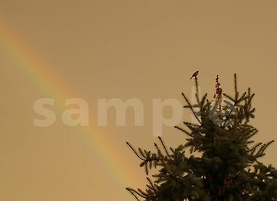 1 Bird in Tree with Rainbow Picture Digi Photo Image Penny Auction for Card